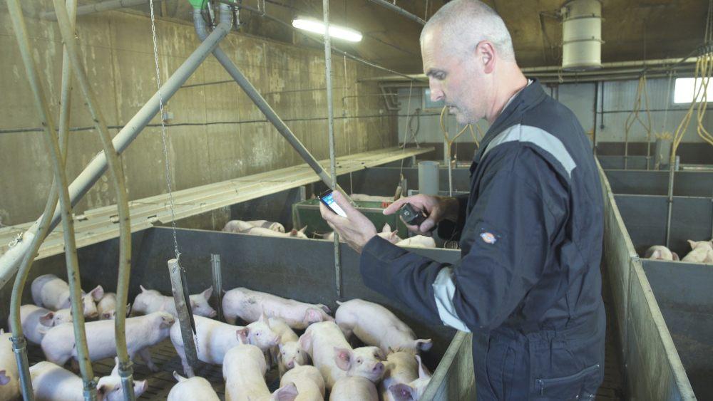 éleveur porcin utilisant application